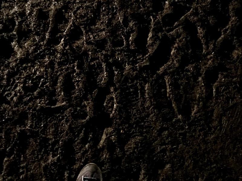 アラバキ雨の日の地面