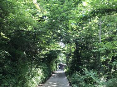10年ぶりの高尾山、平日に6号路を登ってきました