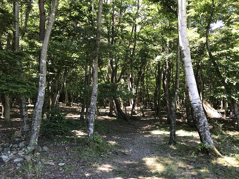 スミカキャンプフィールドの林間サイト