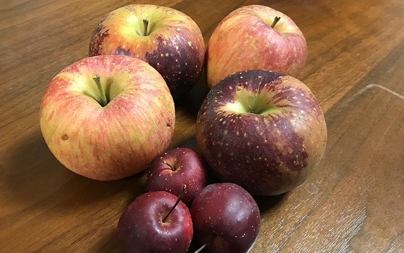 りんご狩りで収穫したりんご