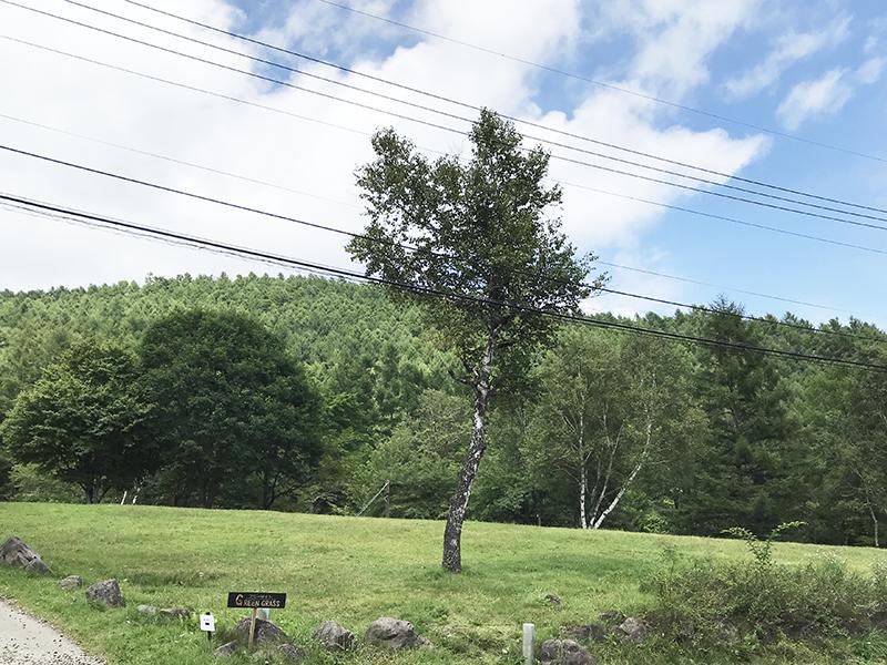駒出池キャンプ場グリーンツリー